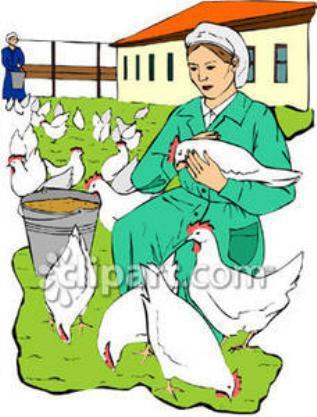Η γυναίκα και η κότα - Αίσωπος