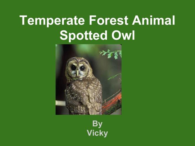 Spotted Owl Vicky