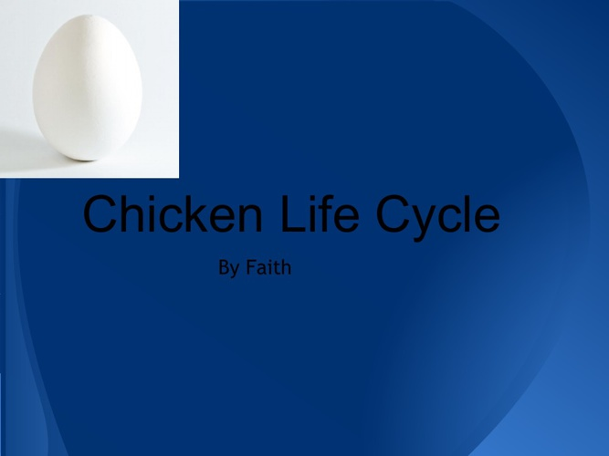 Faith's Chicken Life Cycle