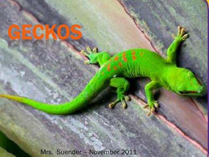 Gecko-flipbook