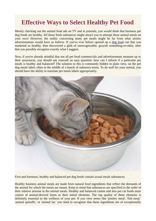 Effective Ways to Select Healthy Pet Food