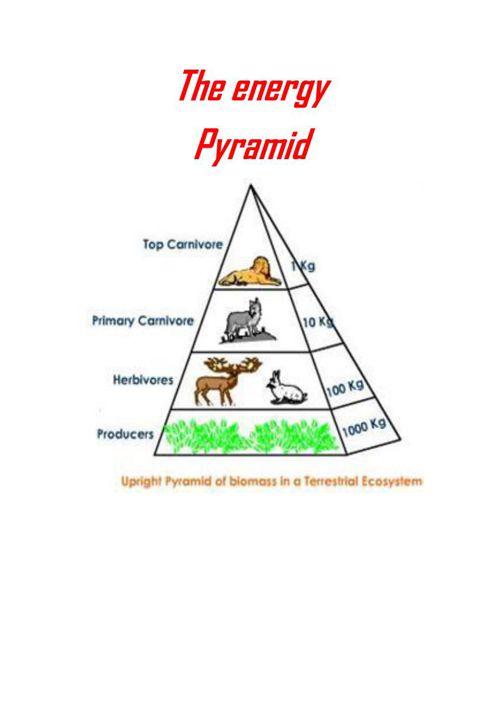 Copy of food_pyramid