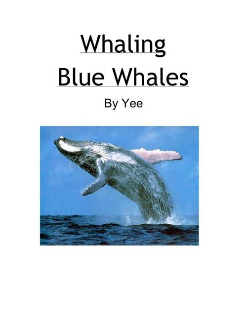 Blue Whale Essay