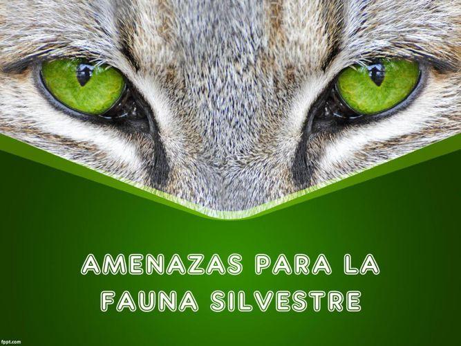 PRESENTACION AMENAZAS PARA LA FAUNA SILVESTRE