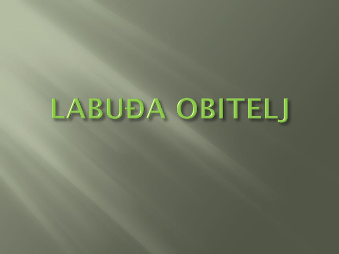 LABUĐA OBITELJ