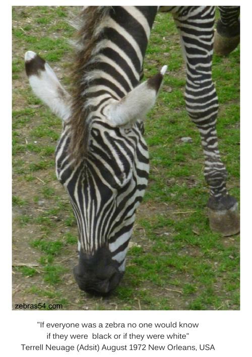 AZ The Art of Zebra by zebras54