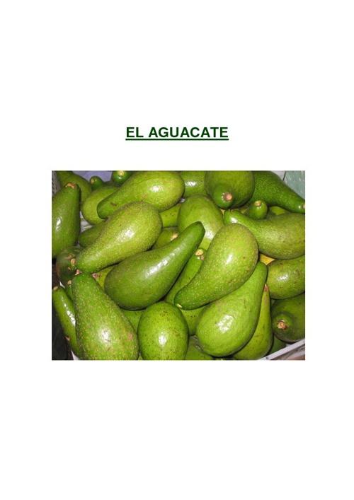 New Flip EL AGUACATE