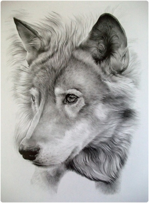realistic-pencil-drawings-of-animals-10