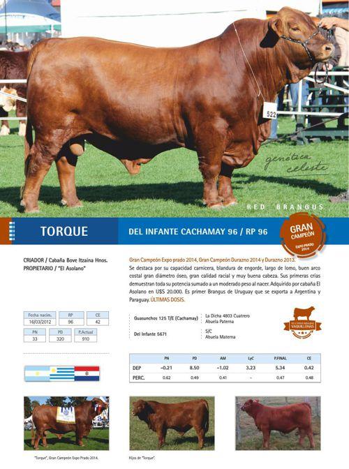 Catálogo FERTIGEN 2015 - raza Red Brangus
