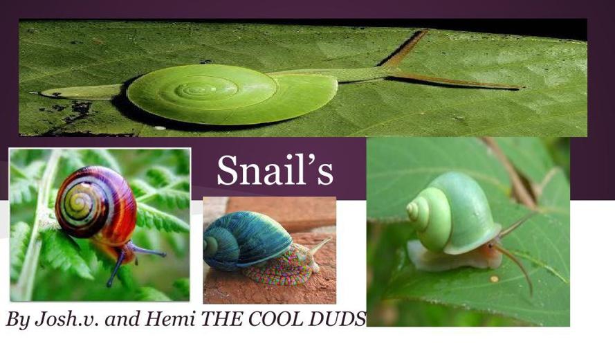 Snail's
