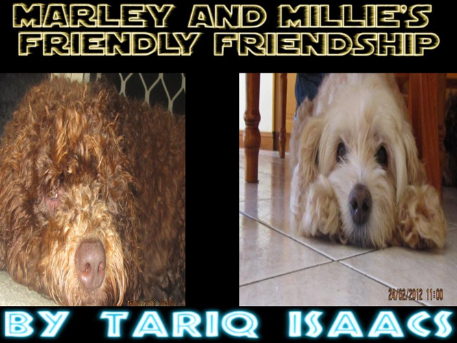 Millie and Marley's Friendly Friendship