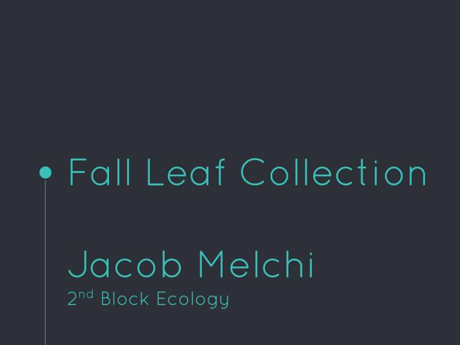 Fall Leaf Collection - Jacob Melchi