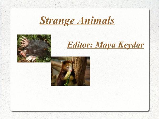 strange animals bar maya