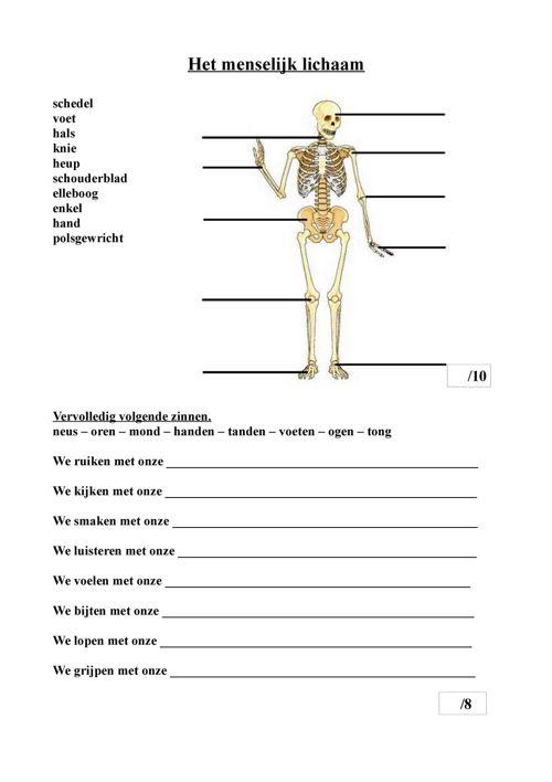 Het_menselijk_lichaam