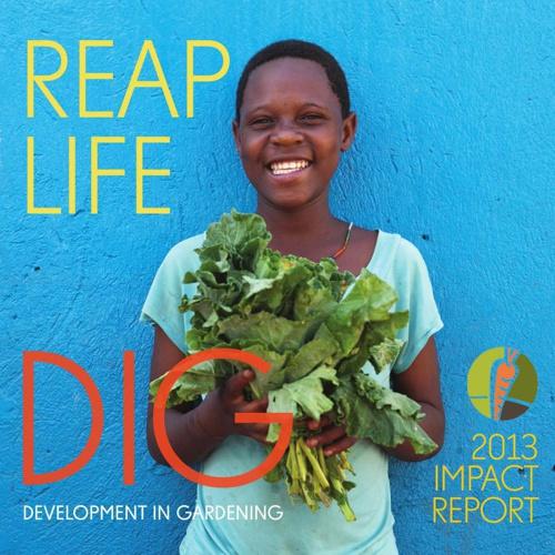 DIG Impact Report 2013