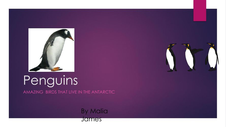 Penguins By Malia