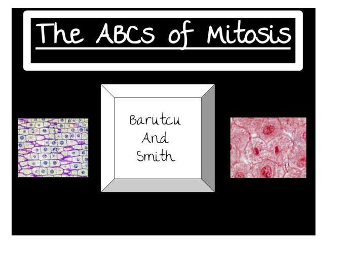 Mitosis Flipbook