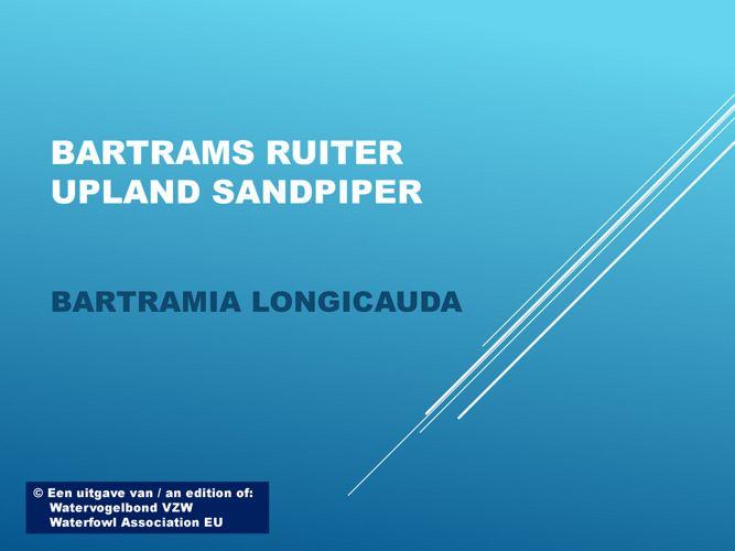 Bartrams ruiter - Upland sandpiper