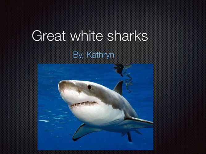 Great white sharks (1)