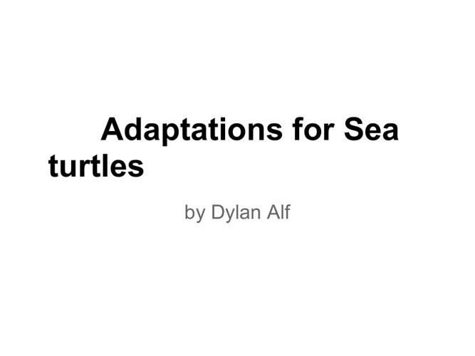 sea turtle adaptation