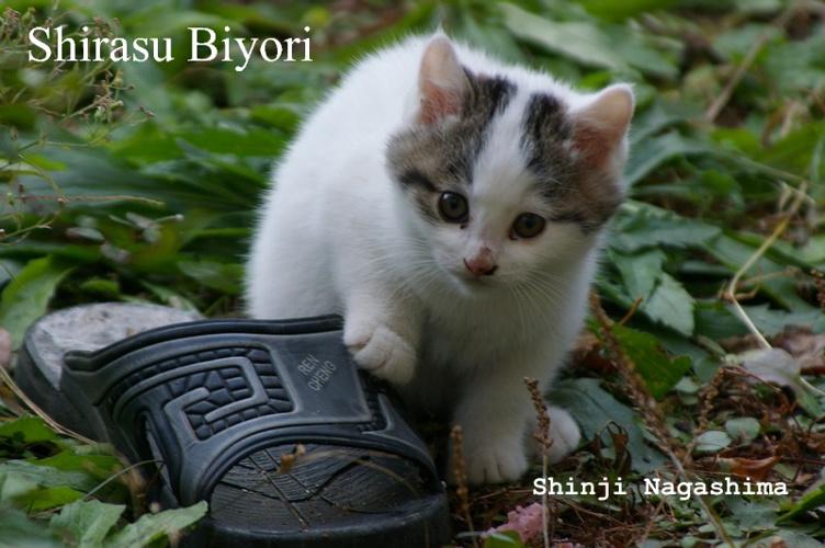 Shirasu biyori