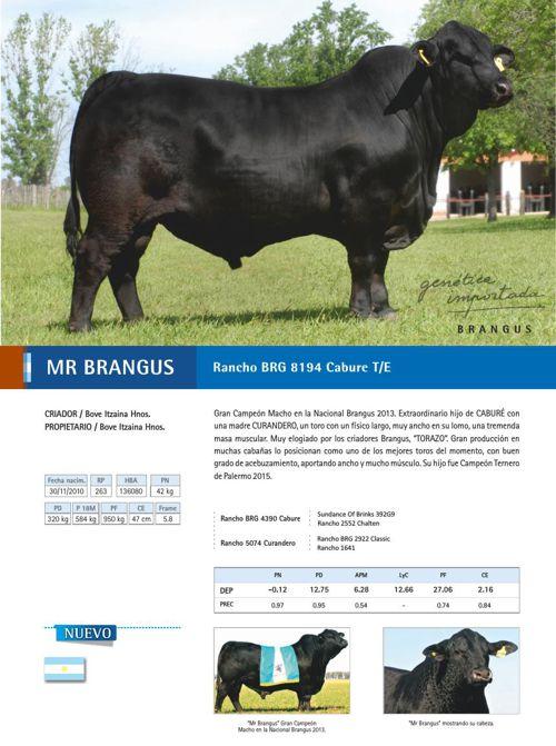 Catálogo FERTIGEN 2015 - raza Brangus