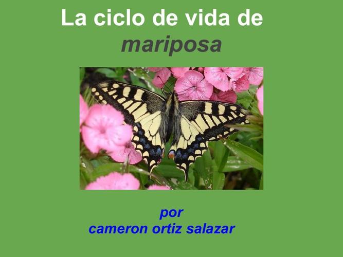 cameron mariposa