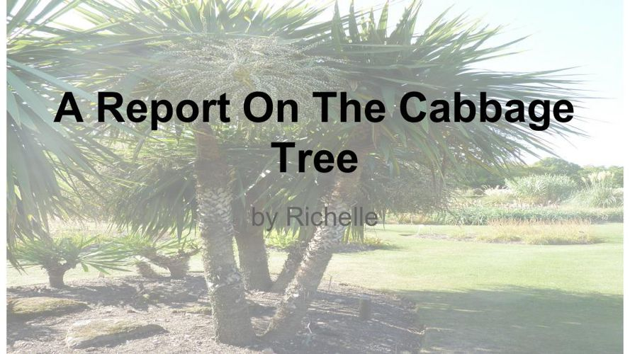 Richelle's Report On Trees