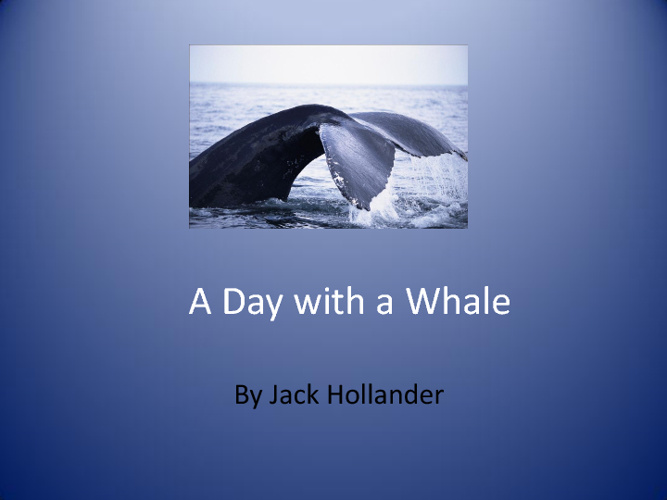 A Day in the Life of a Whale