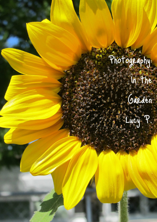 Photography: In the Garden