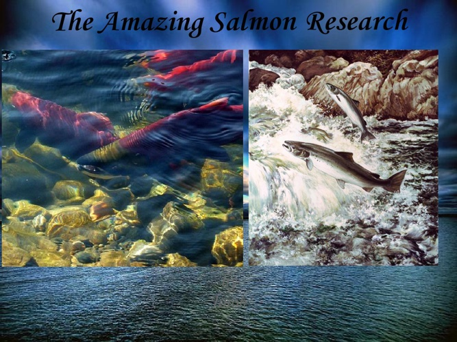 The Amazing Salmon Research!