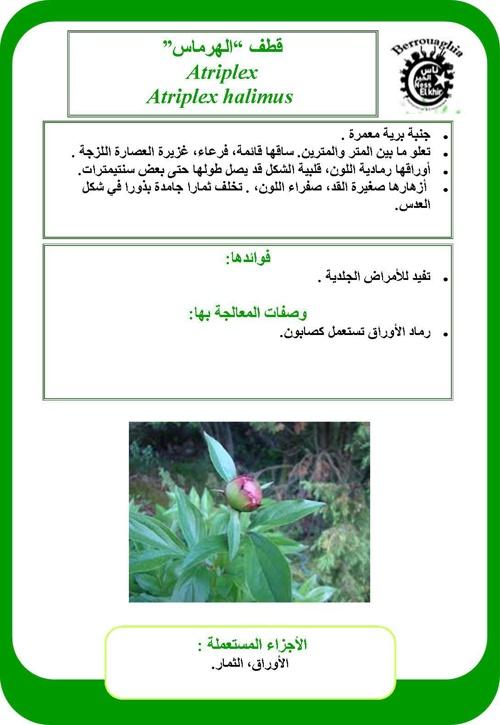 قائمة الأعشاب الطبية