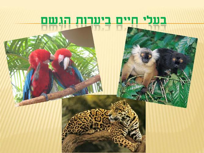 בעלי חיים ביערות הגשם