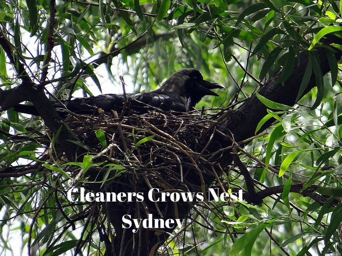 Cleaners Crows Nest