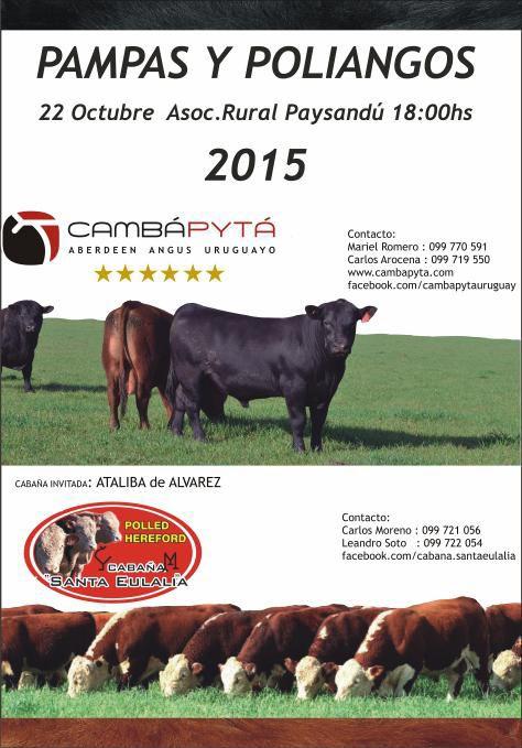 Catálogo Paysandu 2015