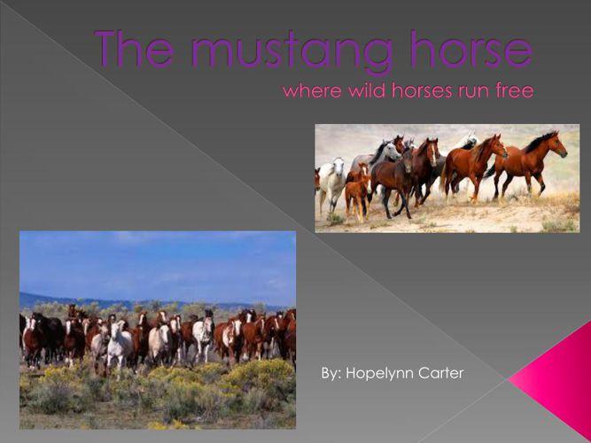 The mustang horse hopelynn