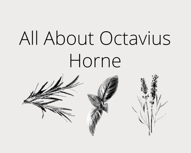 All About Octavius