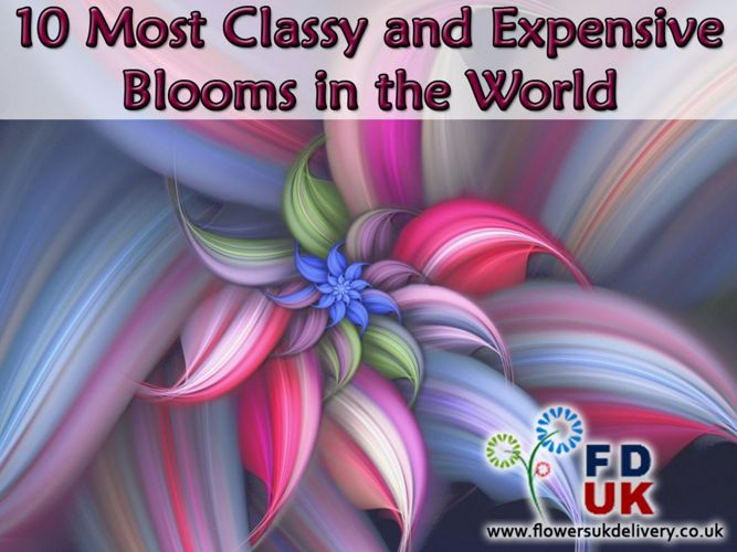 10 Most Classy and Expensive Blooms in the World