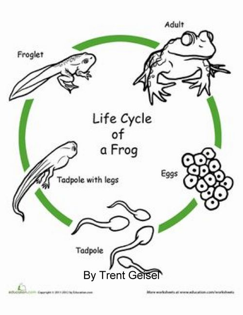 Frog Book- Geisel