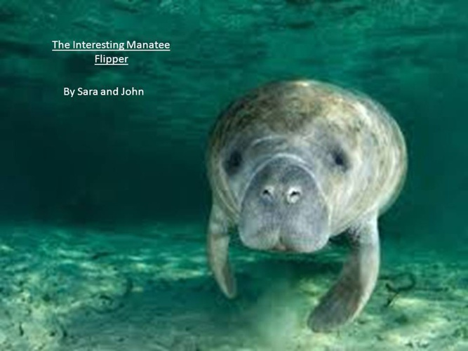 The Interesting Manatee
