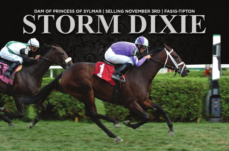 TEST_version 3_Storm Dixie brochure FTNOV14