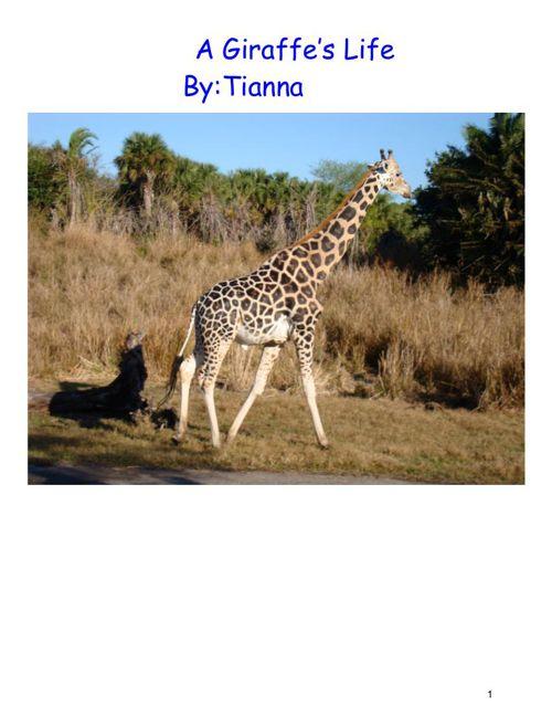 A Giraffe's Life