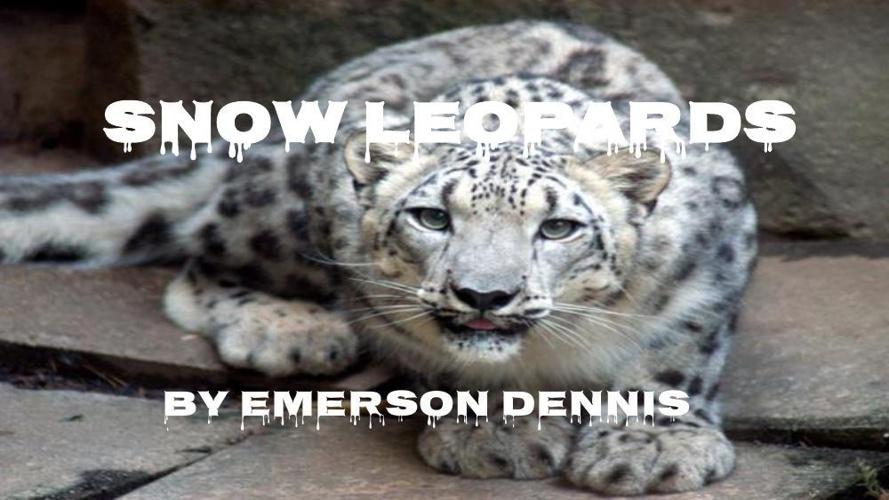 Snow Leopard Presentation