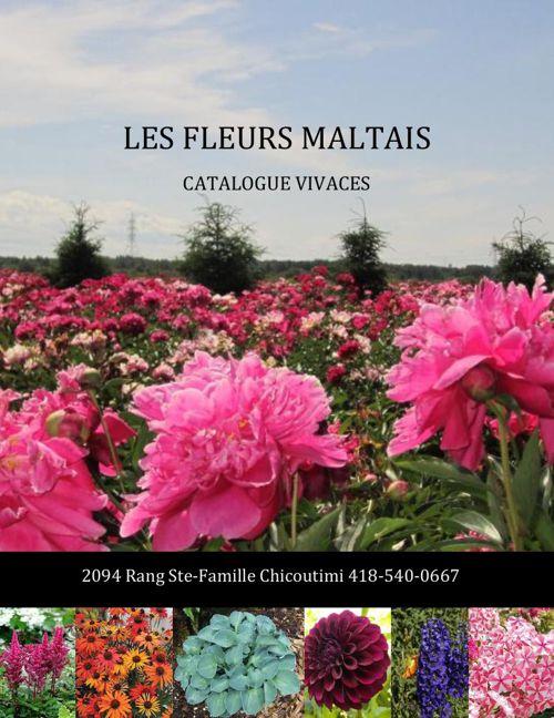 catalogue vivaces les fleurs maltais