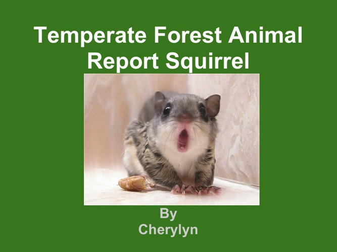 Cherylyn tree squrrel