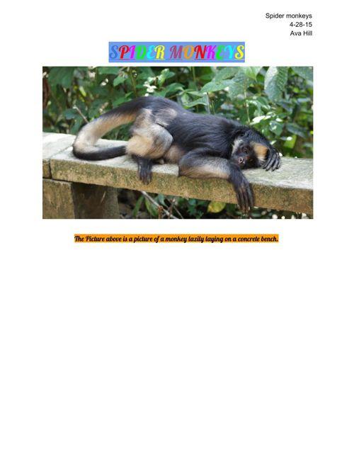 Spider Monkey Book