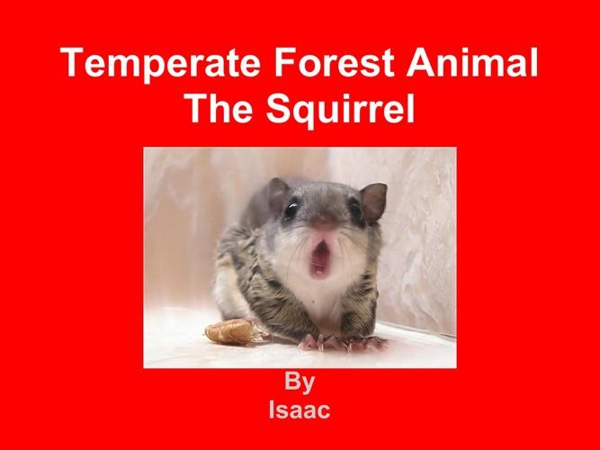 Squirrel Isaac