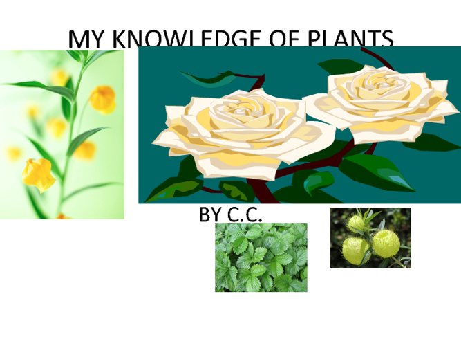 MY KNOWLEDGE OF PLANTS