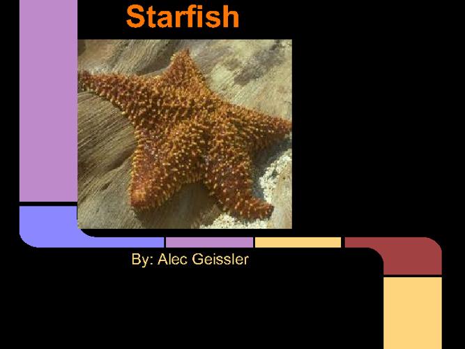 Alec's Sea Animal Presentation