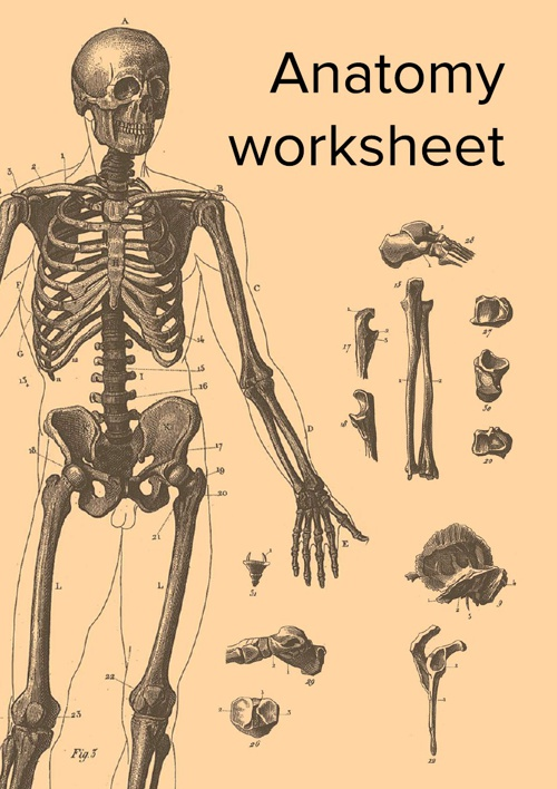 Anatomy worksheet